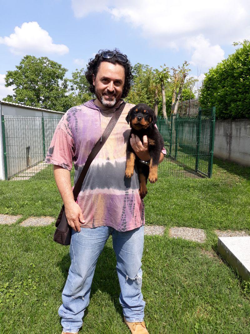 Cuccioli Rottweiler - Buoso da Dovara